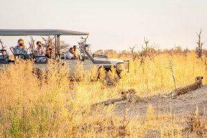 Cheetah viewing on game drive at mma Dinare Camp