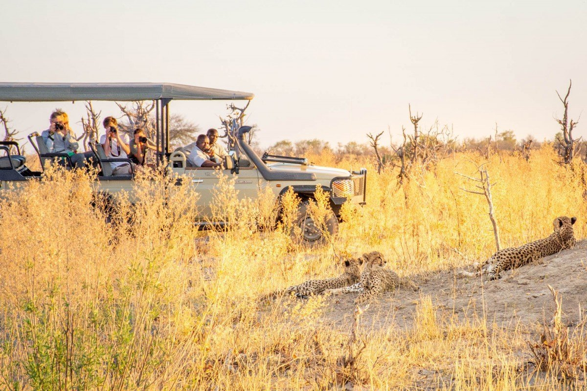Cheetah viewing on game drive at mma Dinare Camp