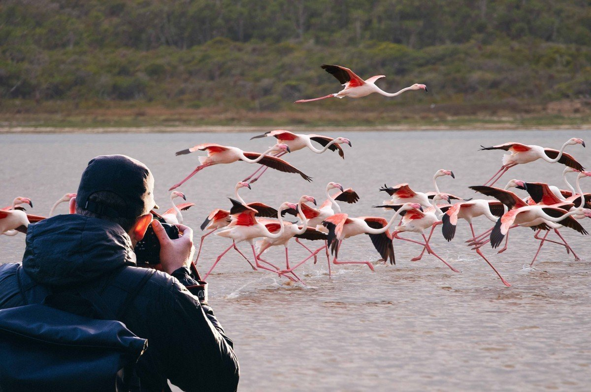 Photographic flamingoes in Botswana