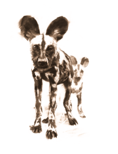Wild Dog Safaris The African Wild We Know Where To Find Them