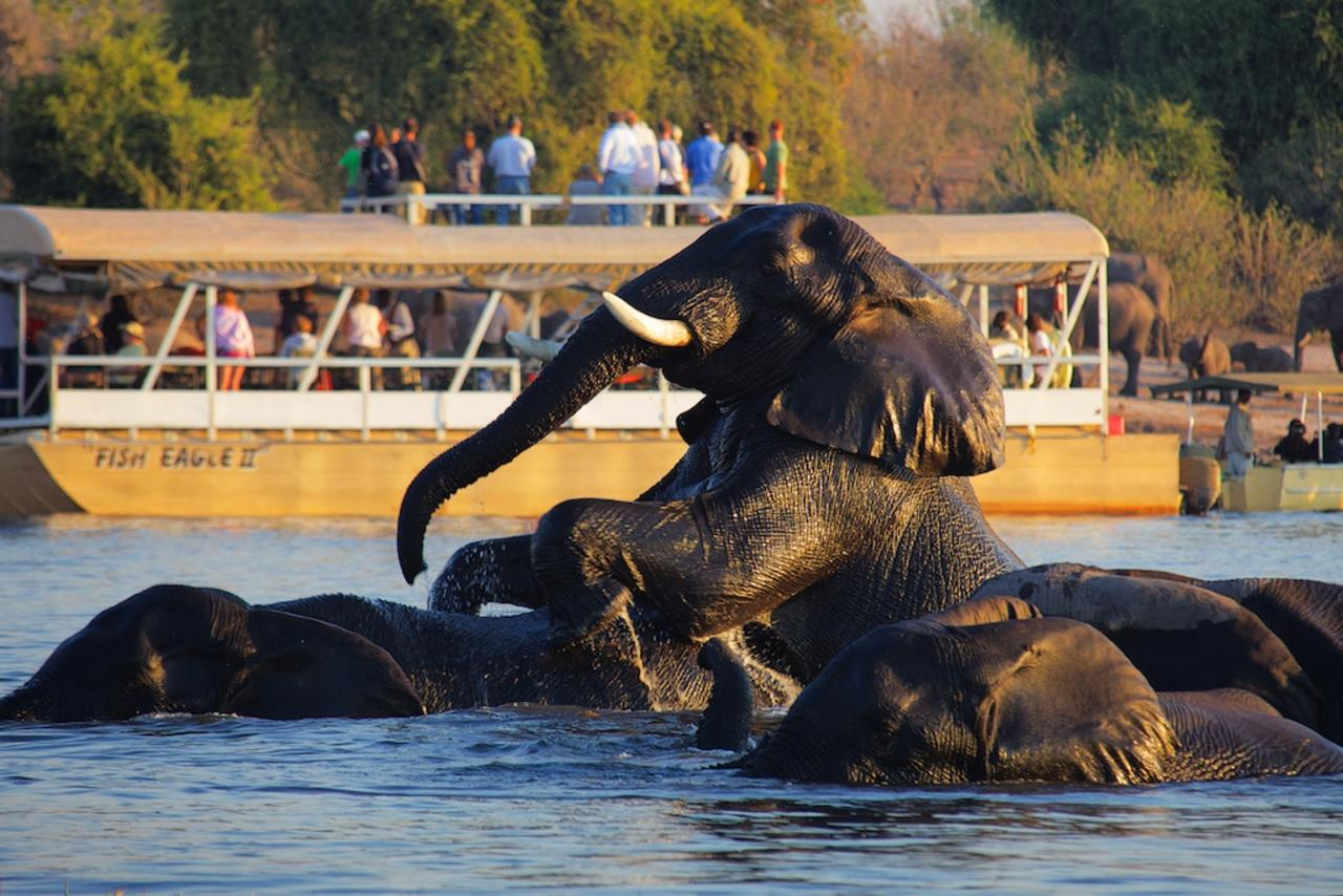 Chobe River cruise with elephants