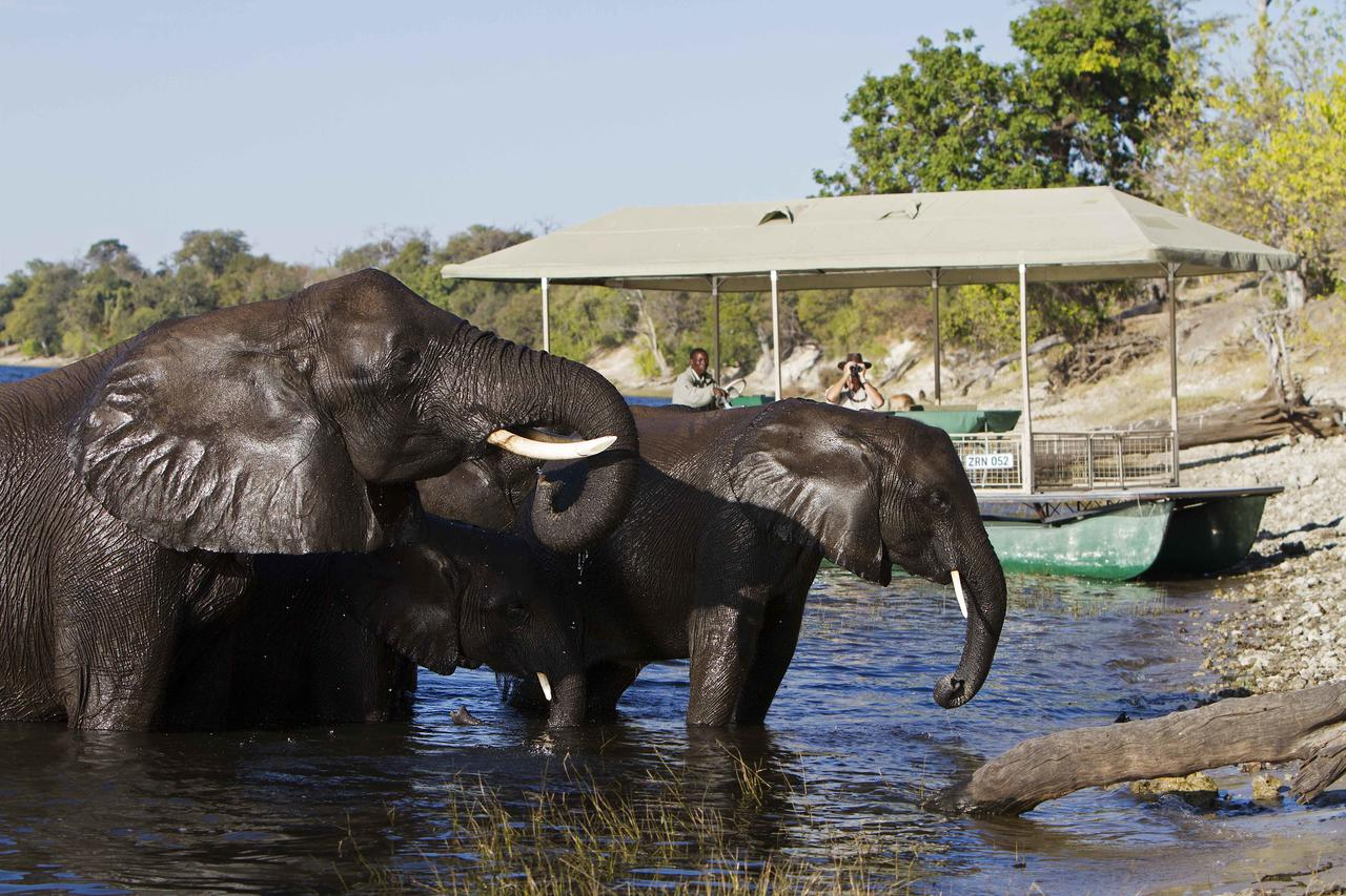 River boat safari with elephants at Chobe Savanna Lodge