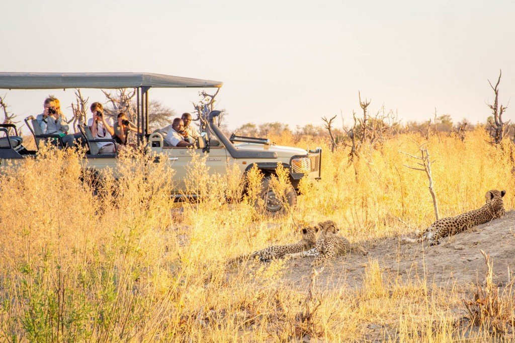 Cheetah sighting on a game drive in the Okavango