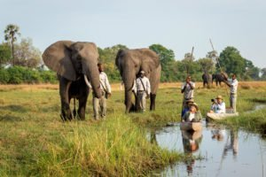 Mokoro ride with elephants at Abu Camp