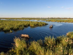 Boat cruise viewing an elephant in the Okavango Delta