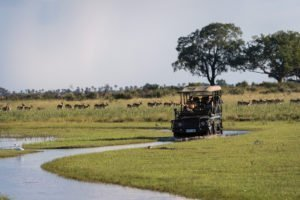 Game drive in the Okavango Delta
