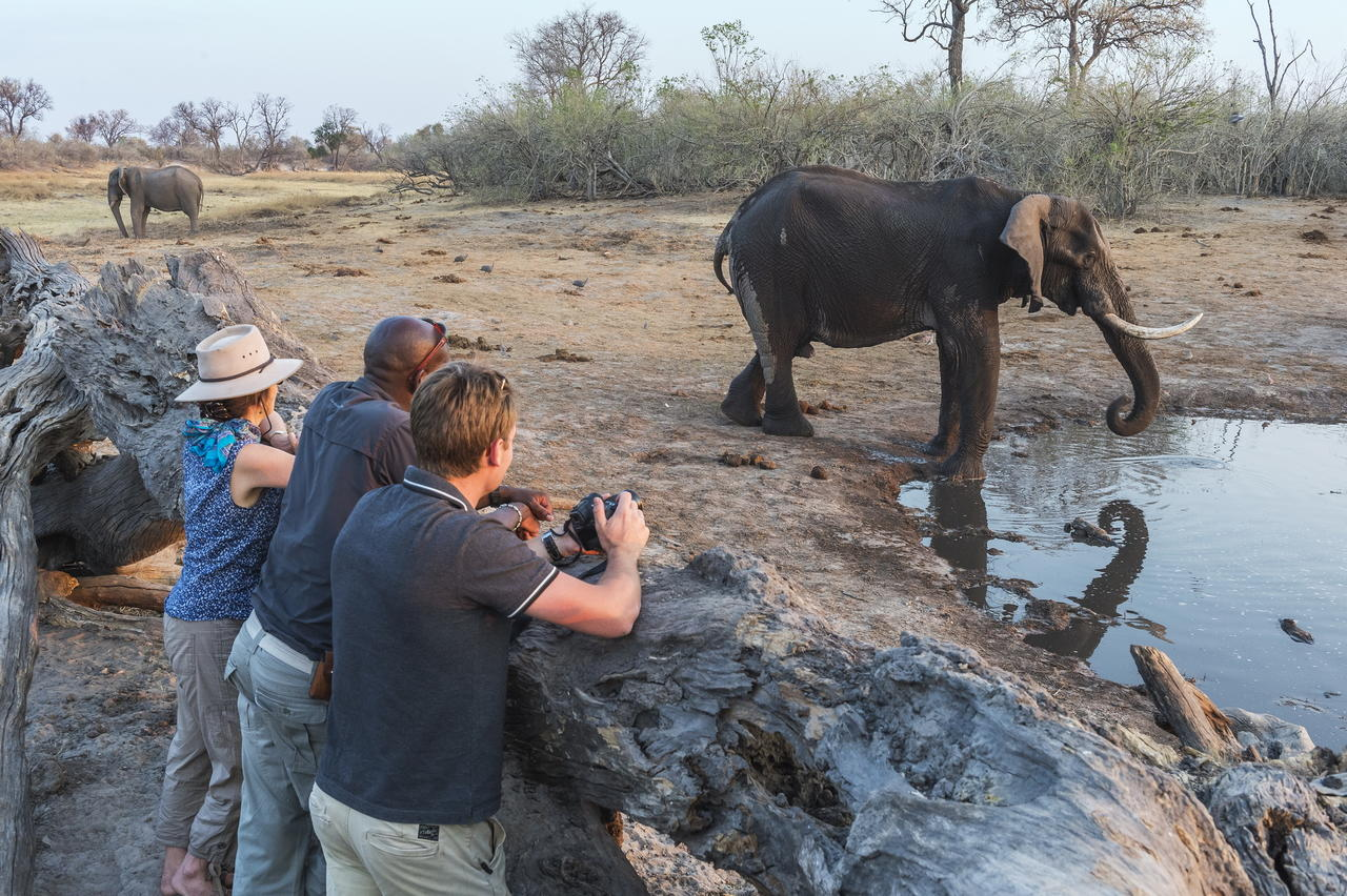 Watching elephants from the hide