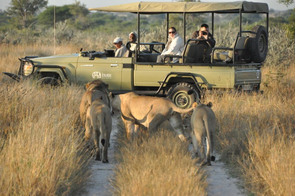 Lion sighting in the Kalahari