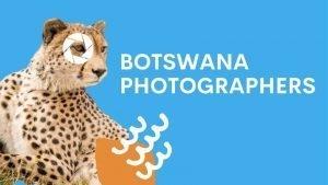 Cheetah looking cool