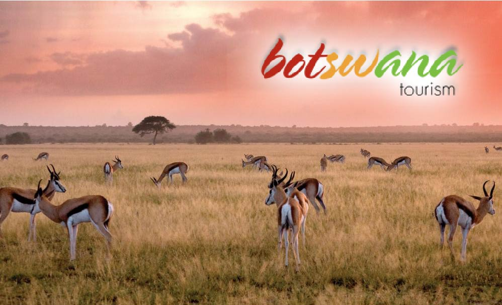 Botswana tourism photo of impalas