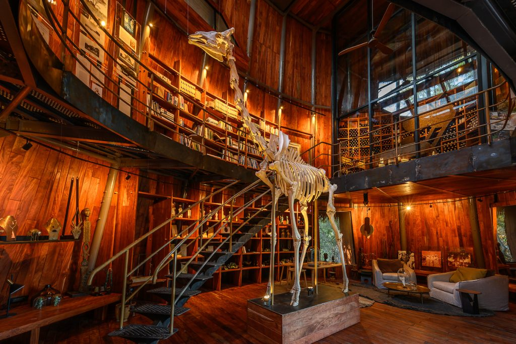 jao Museum and giraffe skeleton