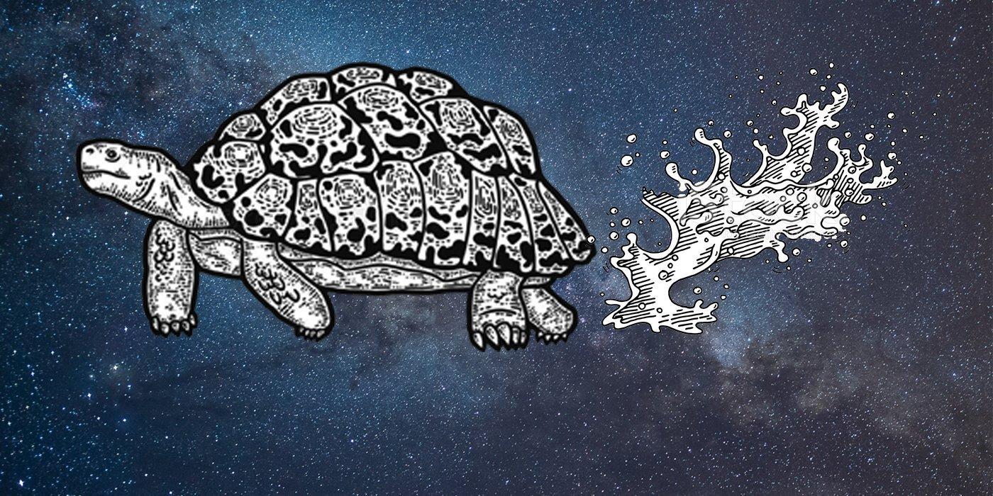 Tortoise wee