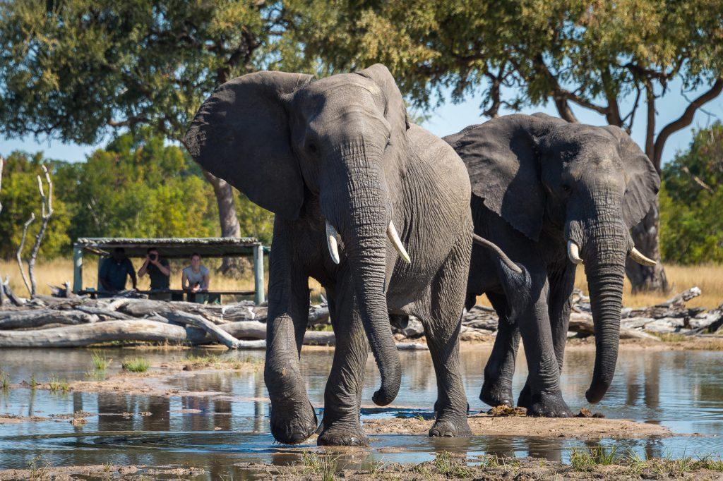 Elephants at Little Makalolo Camp